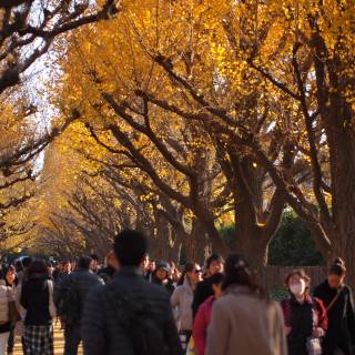 Tokyo Events This Week: Autumn Festivals and Horseback Archery