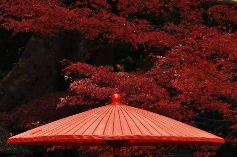 Maples at Koshikawa Korakuen