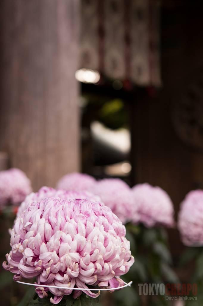 autumn flowers tokyo