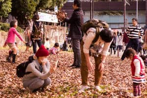 Jingu Gaien autumn leaves