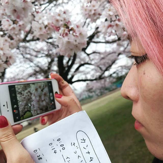 Photographing Cherry Blossom
