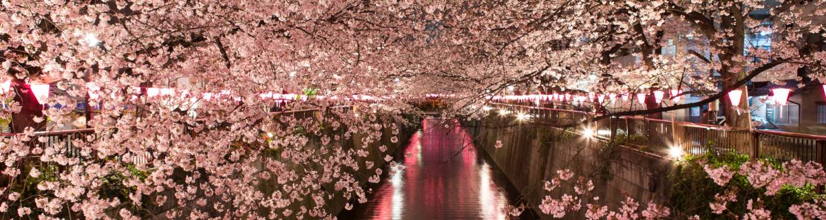 Cheapo Weekend for March 25-26: Sakura Season Has Arrived!