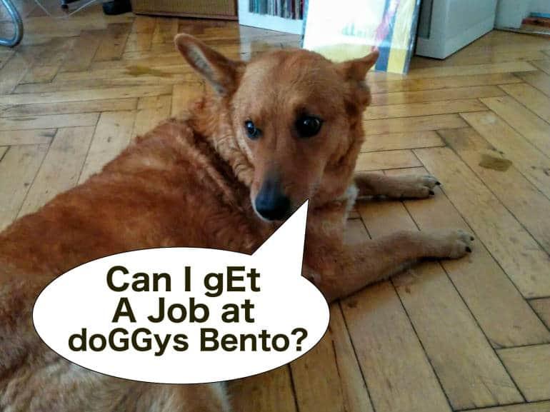 can-i-dog
