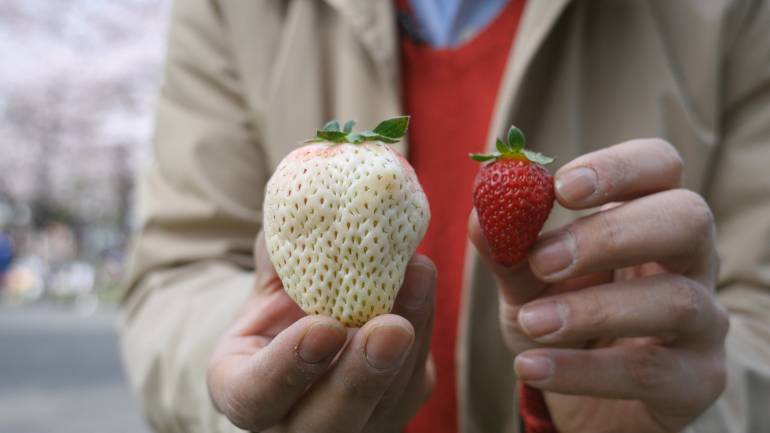 white strawberry japan