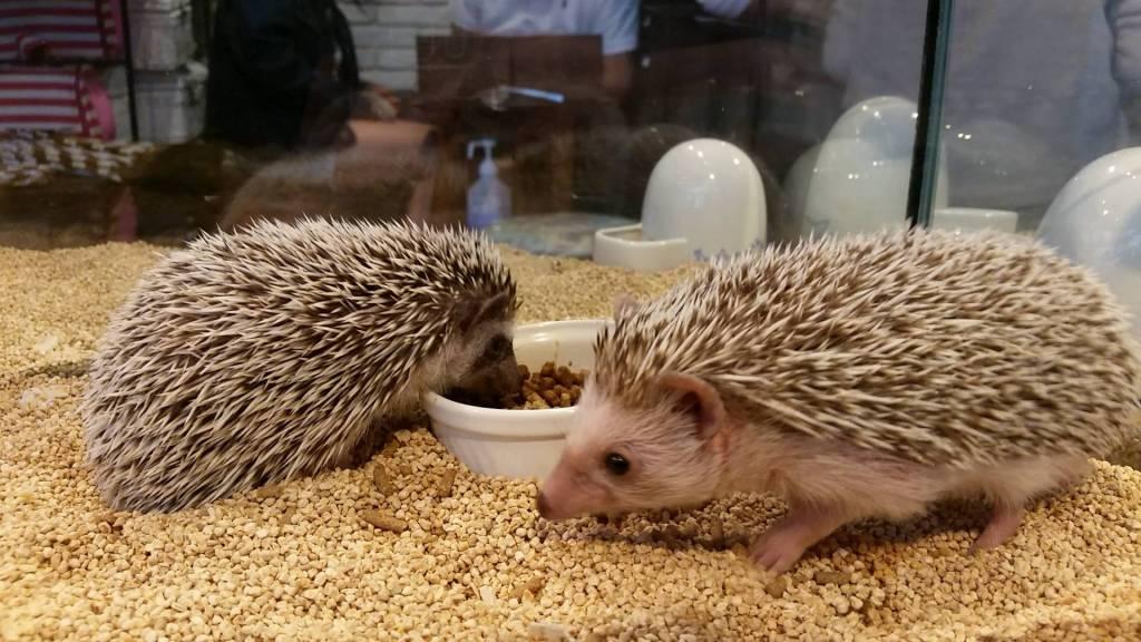 Hedgehogs Roppongi