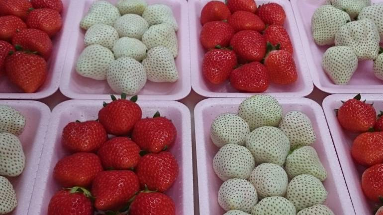 white strawberry japan