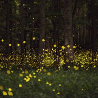 Cheapo Weekend for June 4-5: Flower Days, Firefly Nights