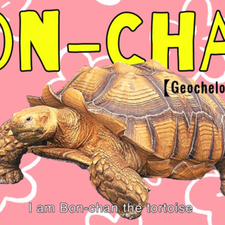 One man and his Tortoise... Meet Bon-chan
