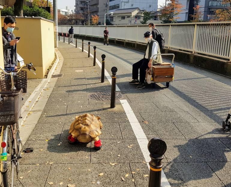 Riku Chan walking through Waseda