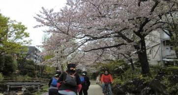 viator-tokyo-by-bike-skytree-kiyosumi