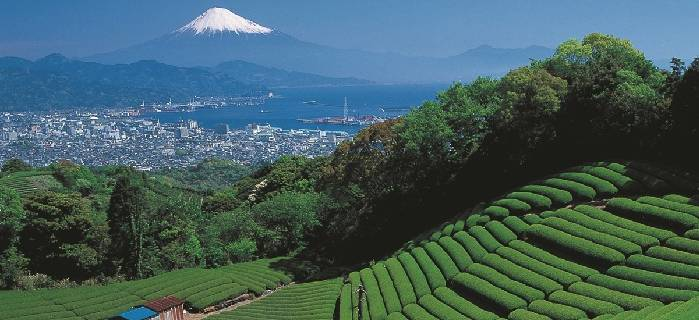 One Day Mt. Fuji Area Tour Incl. Shinkansen