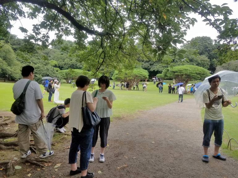 Pokemon Go players at Shinjuku Park