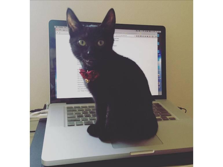 cat tokyo