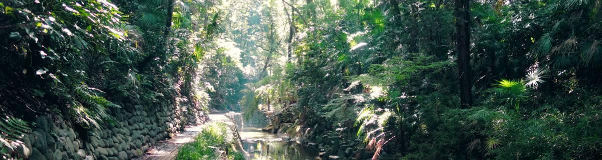 Todoroki Valley: Tokyo's Secret Escape