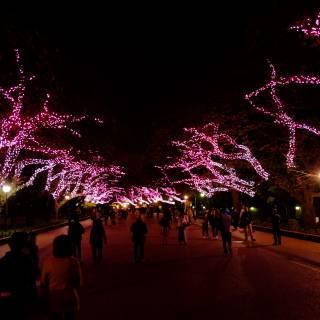 Winter Cherry Illumination at Ueno Park