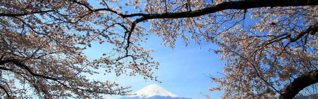 See Mount Fuji's Best Cherry Blossom Spots