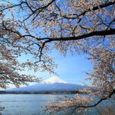 spring day trips from tokyo