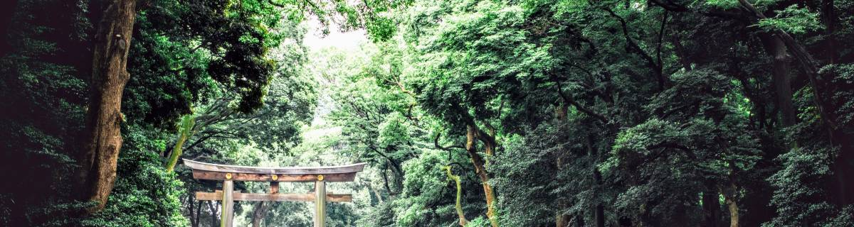 Meiji Jingu: Where Japanese Spirit Meets Western Knowledge