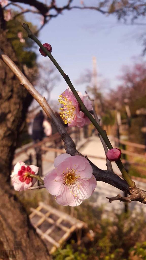 ikegami plum garden tokyo