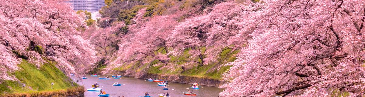 Mega Guide: The Best Spots to See Cherry Blossoms in Tokyo