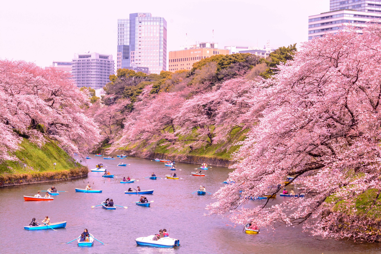861305807 Kitanomaru Park  A Hidden Oasis of Nature