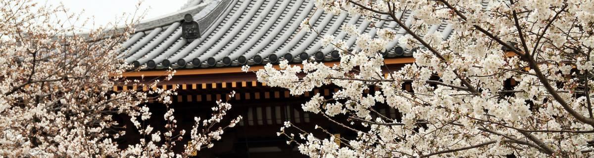 Ikegami Plum Garden: A Sweet Spring Space