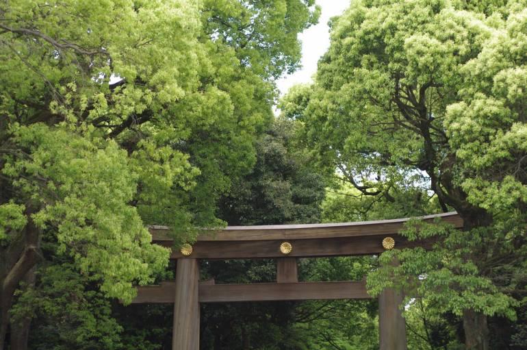 Meiji Jingu Tori Gate