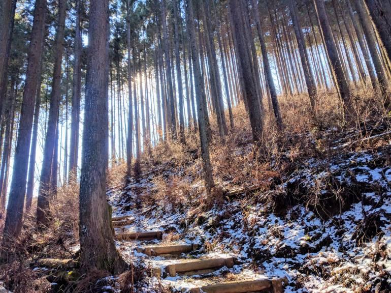 tokyo hiking day trip