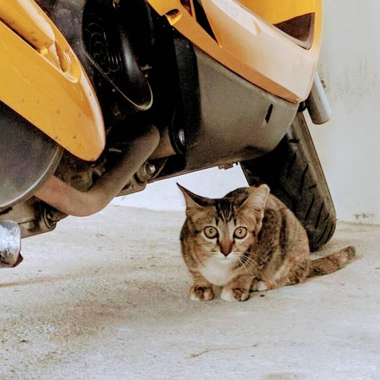 kitten under motorbike