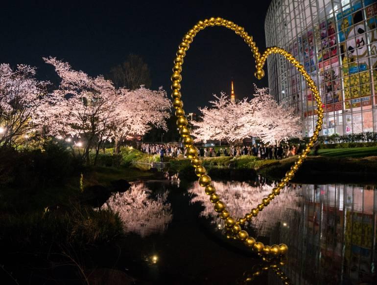 cherry blossoms roppongi yozakura