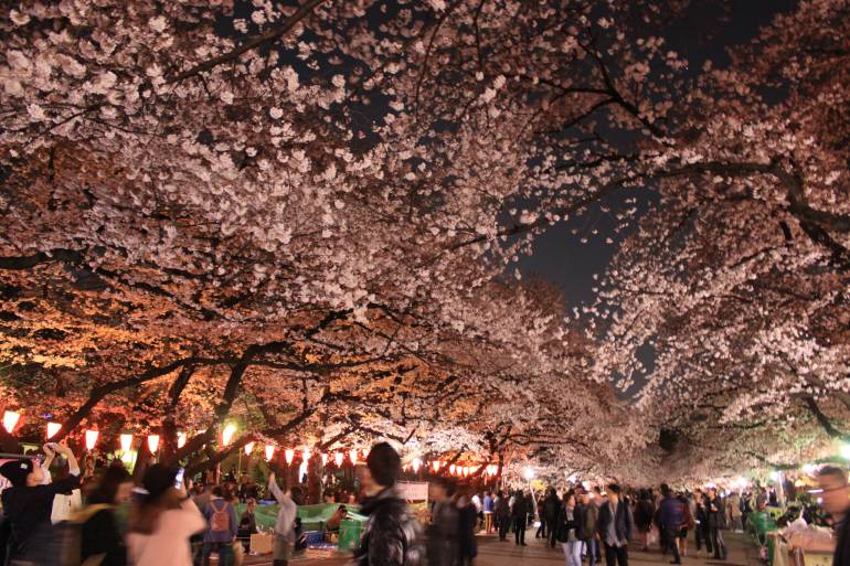 Ternyata Ini Waktu yang Tepat untuk Melihat Mekarnya Bunga Sakura di Jepang!