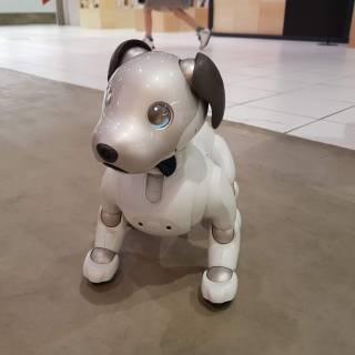 Japan Robot Week 2020