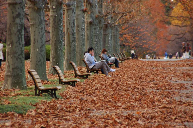 Autumn leaves await travelers from New York to Tokyo