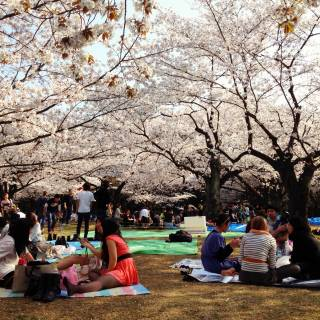How to Join a Cherry Blossom Viewing Party—Even If You Don't Know Anyone in Tokyo!