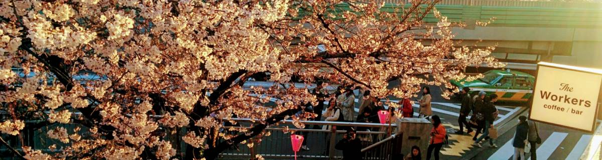 10 Free Things To Do in Nakameguro