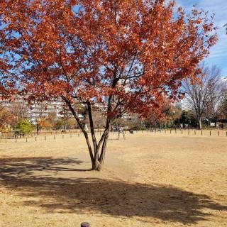 Nakameguro Park