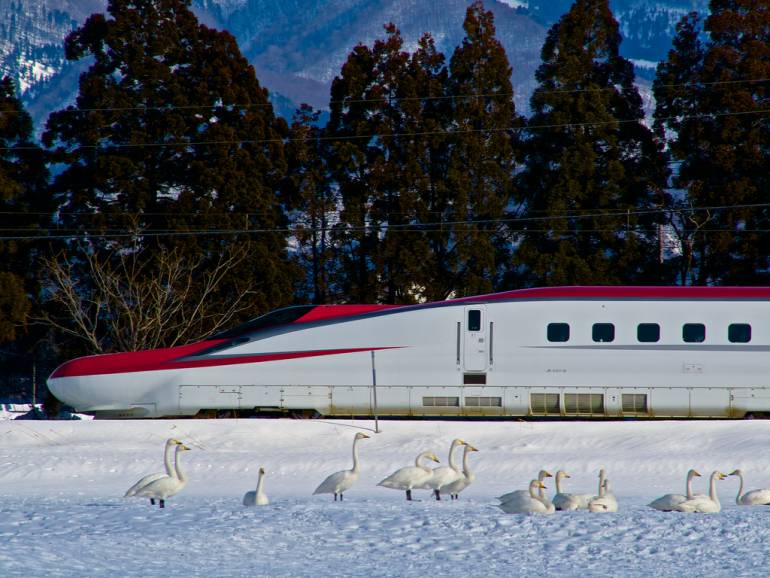 Shinkansen in snow with swans