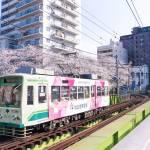 Toden Arakawa Line with sakura