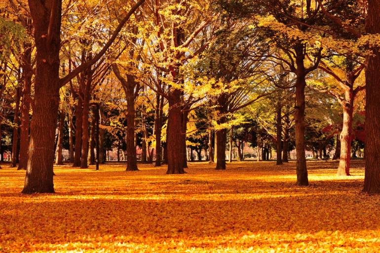 Autumn leaves in Tokyo