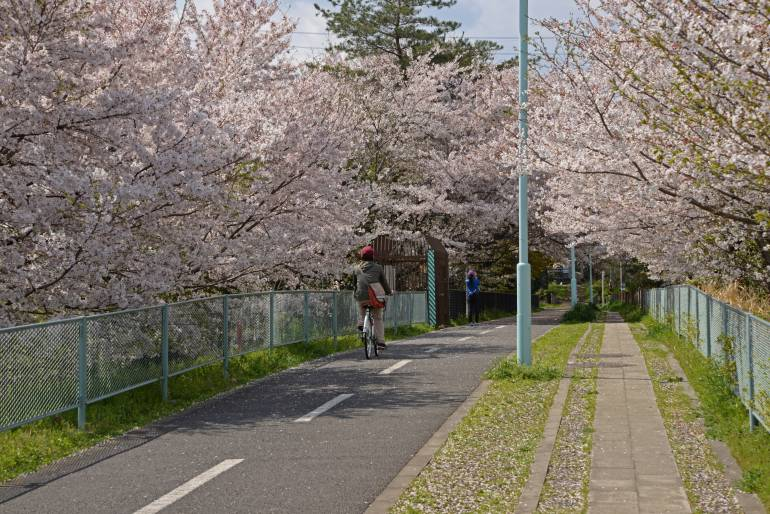Bicycle path to Lake Tama in spring