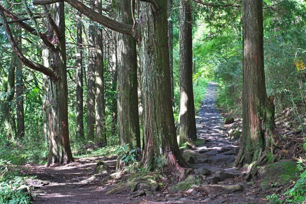 Hiking in Hakone, Tokaido Road