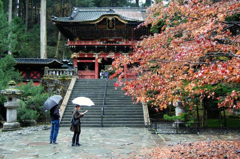 Maple Nikko Autumn
