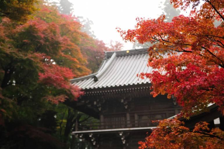 Takao Autumn