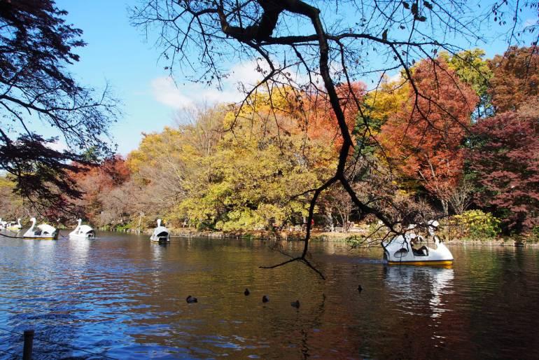 Inokashira Park Autumn koyo