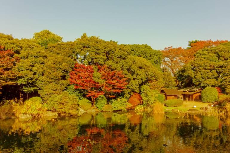 Ueno Park Autumn Koyo