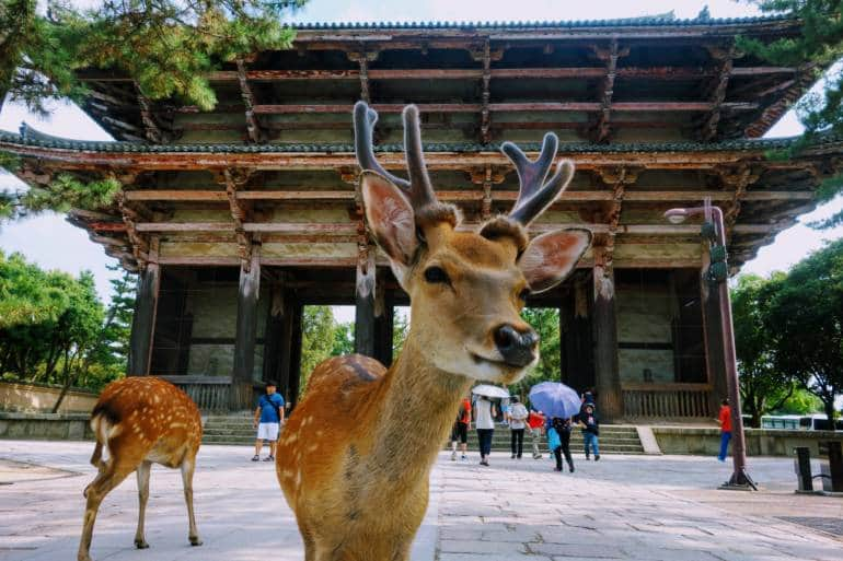 Deer at Nandaimon, Nara