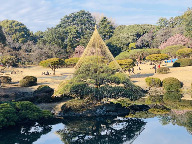shinjuku gyoen winter tree japanese garden