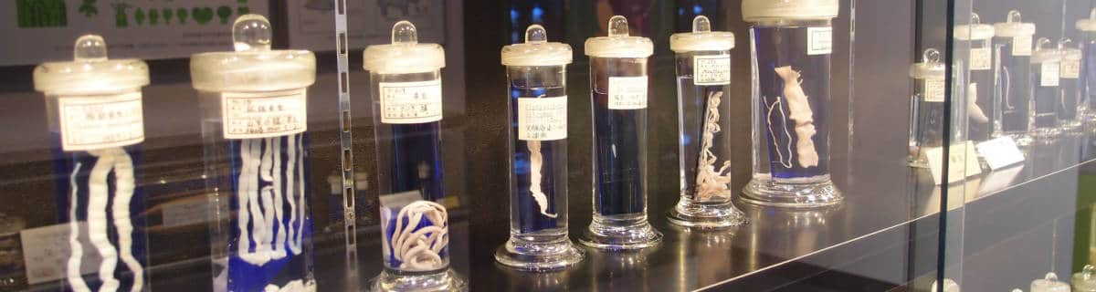 A Can of Worms: The Meguro Parasitological Museum