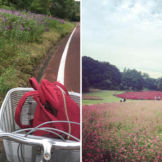 Shinrin park cycle course