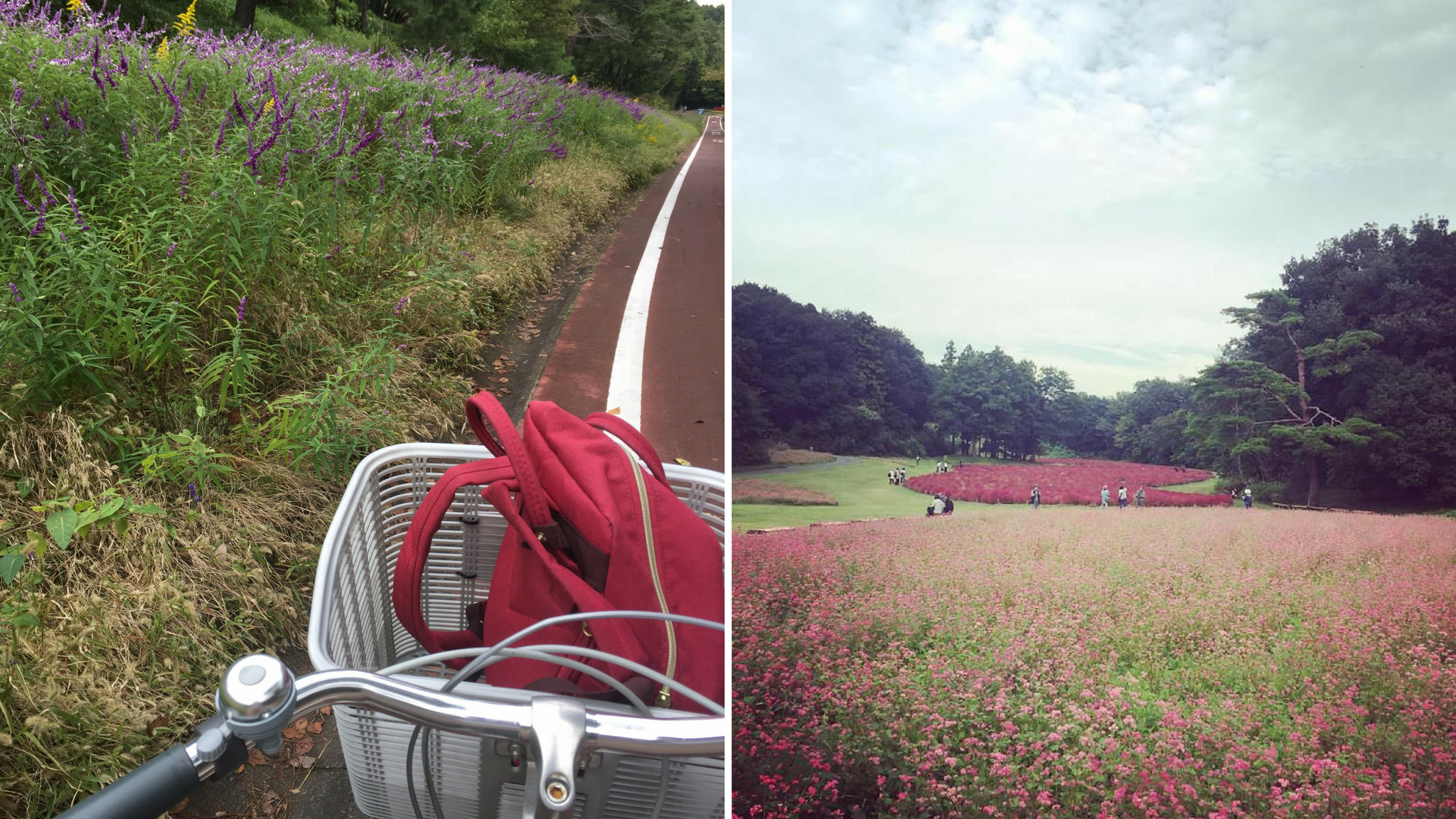 c285d5482 Shinrin Koen Cycle Course for Car- and Crowd-Free Cycling near Tokyo ...